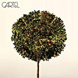 Album «Cartel»by Cartel
